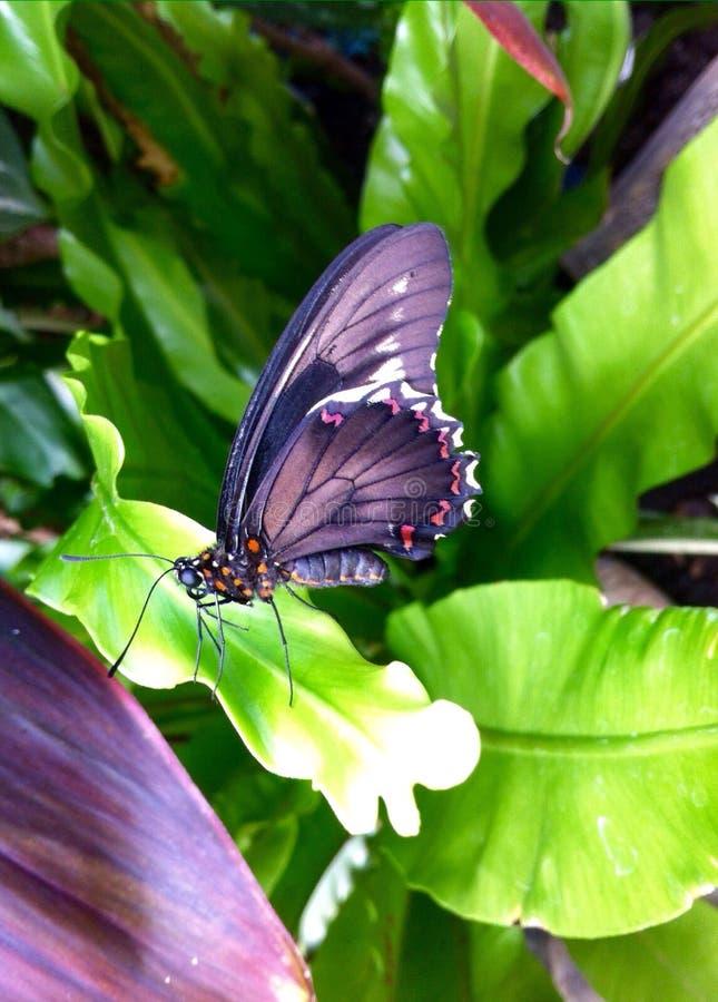 Schmetterlingshaus stockbild