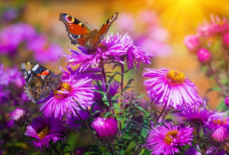 Schmetterlingsnahaufnahme auf einer wilden Blume Nasse grüne Ahornblätter lizenzfreie stockfotos