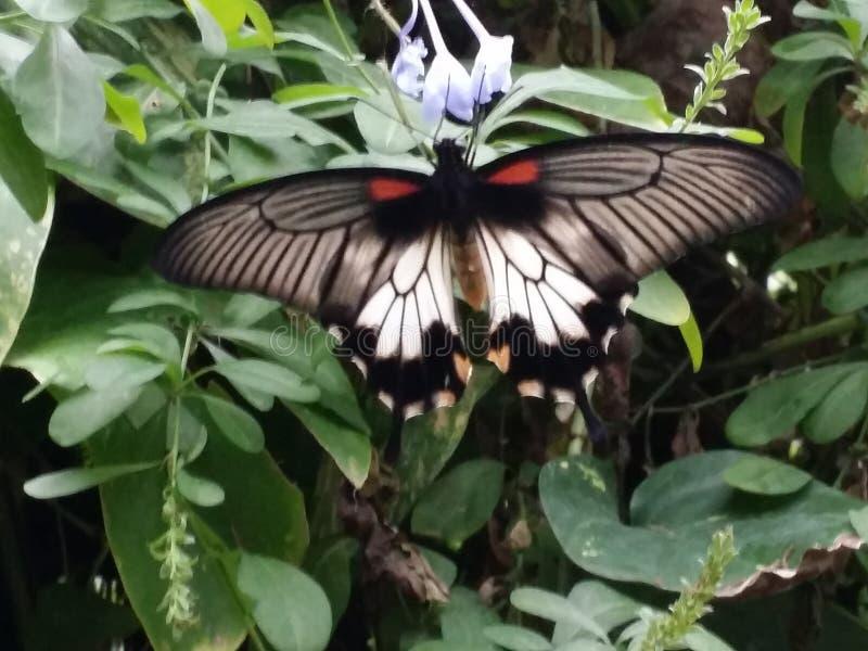 Schmetterlingspark stockbilder