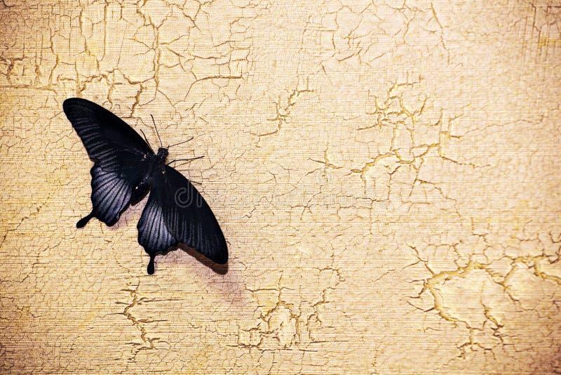 Schmetterlingsscharfer Steinwandhintergrund stockbilder