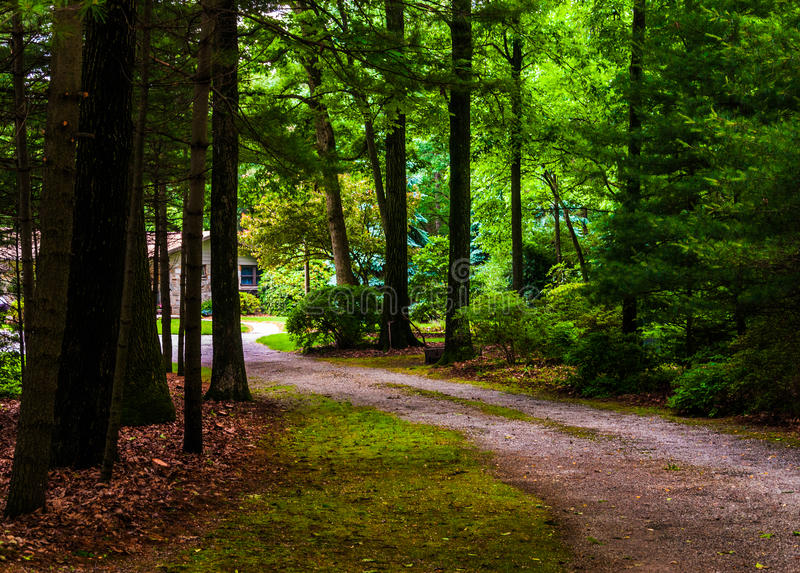 Schmutzfahrstraße zu einem Haus in einem Kiefernwald. lizenzfreies stockfoto