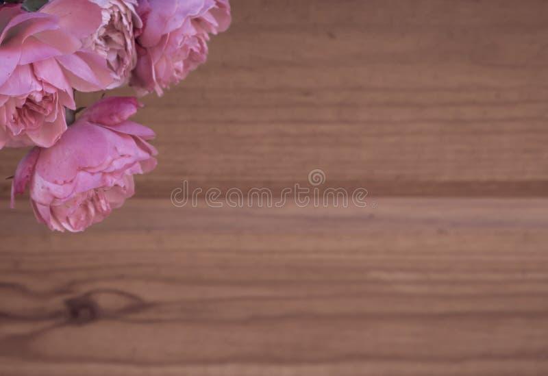 Schmutzig-rosa Rosen lizenzfreies stockfoto