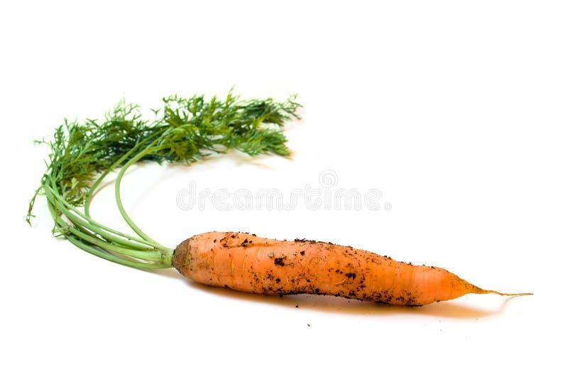 Schmutzige Karotte mit dem Grün getrennt auf Weiß stockbilder