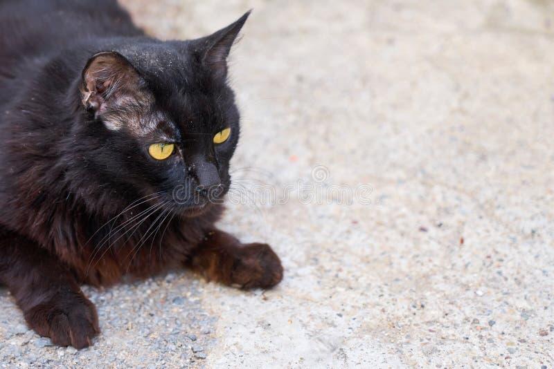 Schmutzige schwarze Katze, die auf der Straße lebt lizenzfreie stockfotos