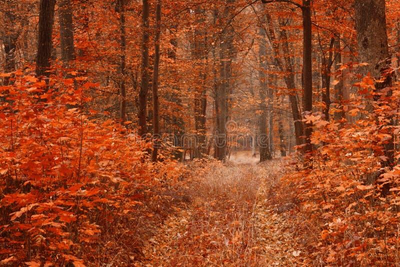 Schmutzige Straße im Herbstbuchenwald stockbild