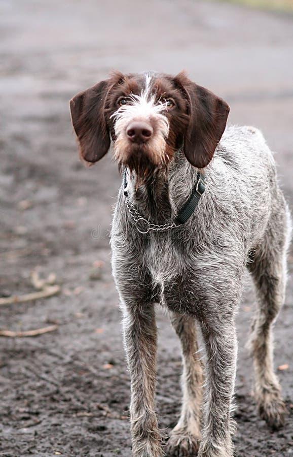 Schmutziger Hund stockfoto