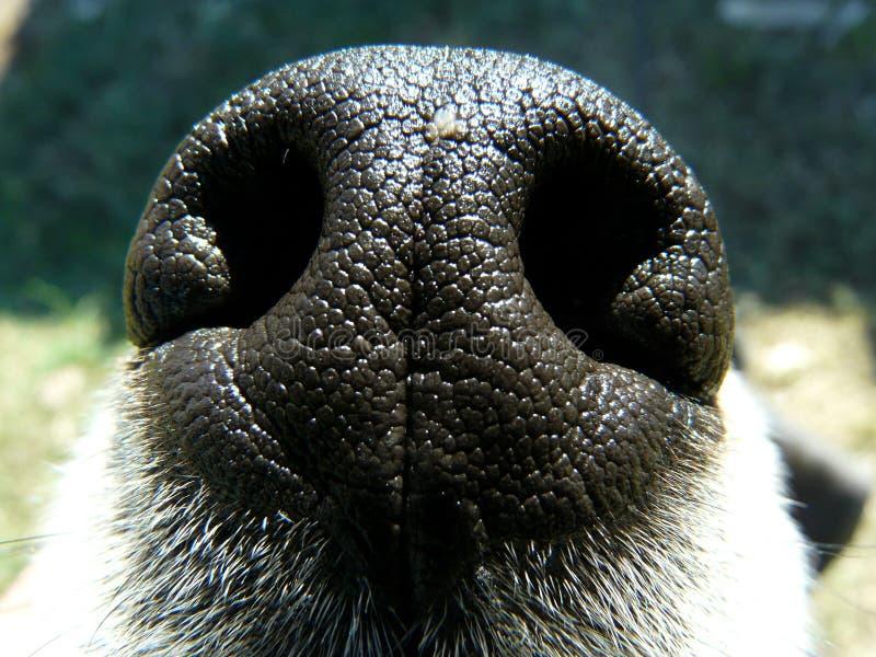 Schnüffeln in die Luft lizenzfreies stockfoto