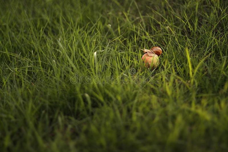 Schnecke auf Apfel stockbild