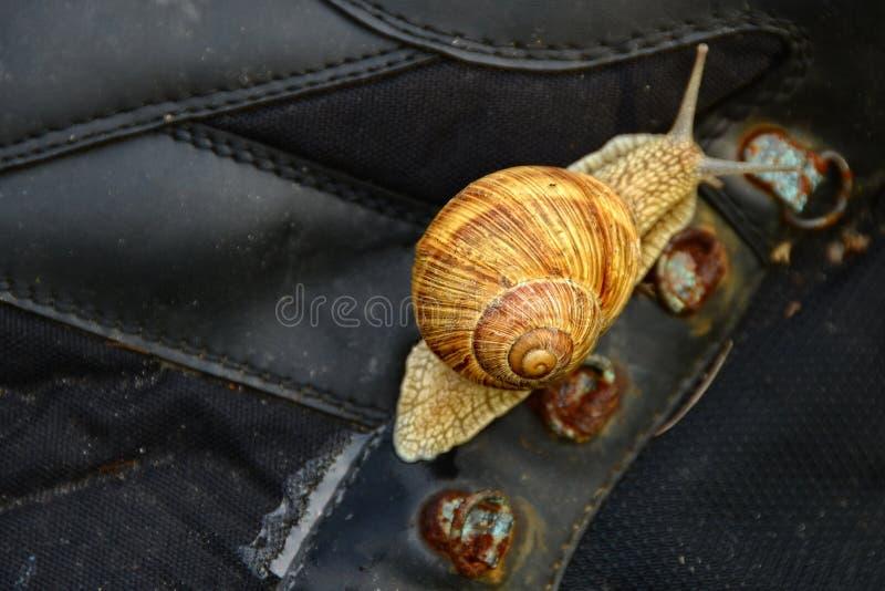 Schnecke auf dem alten Schuh stockfotografie