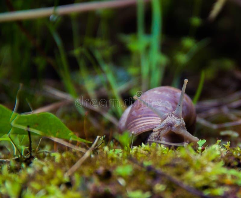 Schnecke auf dem Gras stockfotos