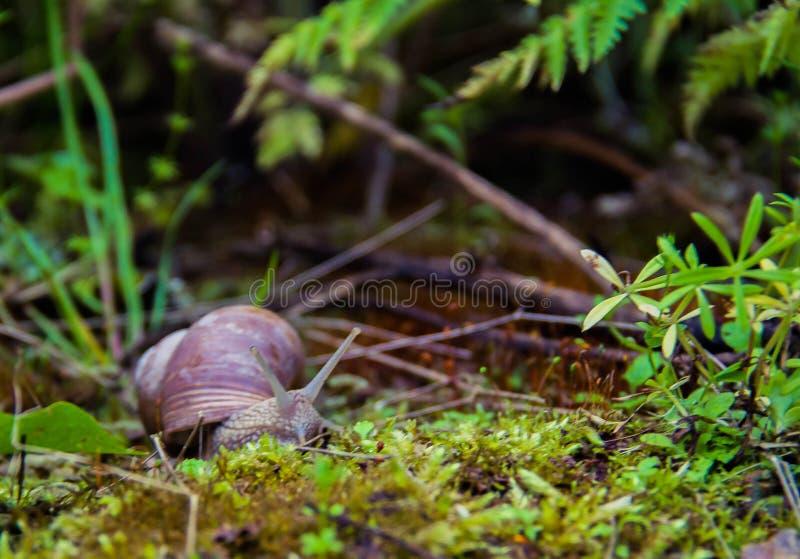 Schnecke auf dem Gras stockfotografie