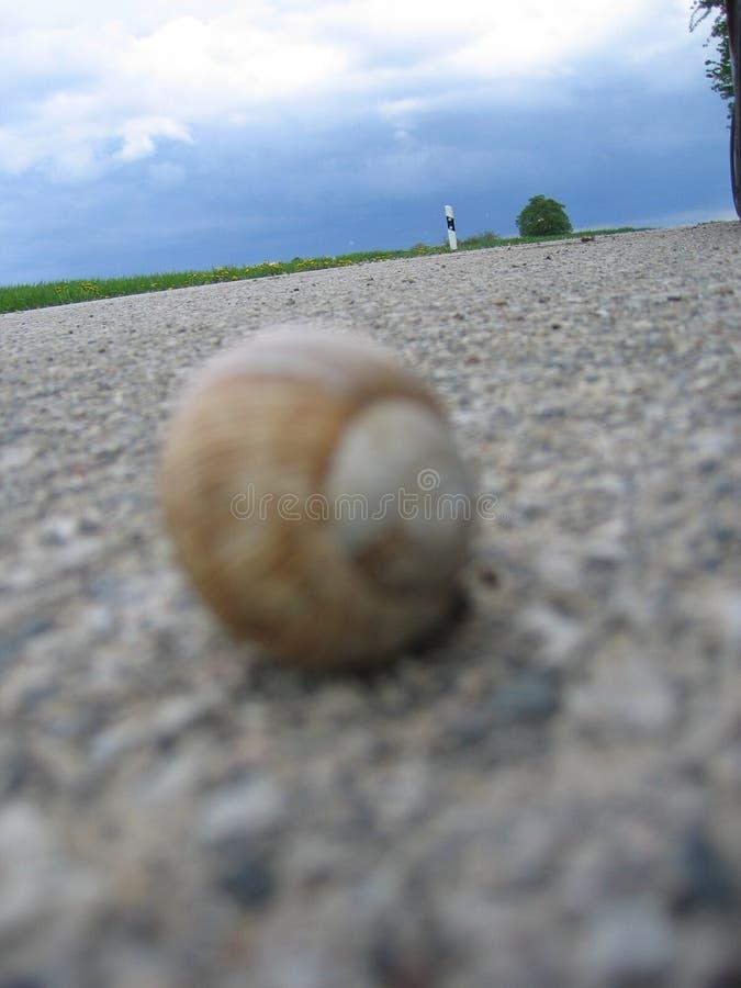 Schnecke Auf Der Straße Lizenzfreie Stockfotos