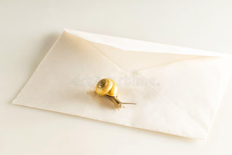 Schnecke auf einem Postumschlag auf einem weißen Hintergrund lizenzfreies stockfoto