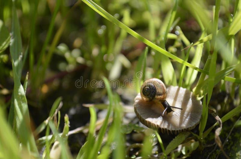 Schnecke auf Pilz stockbilder
