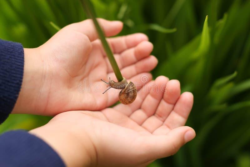 Schnecke in den Händen von Kindern stockbild