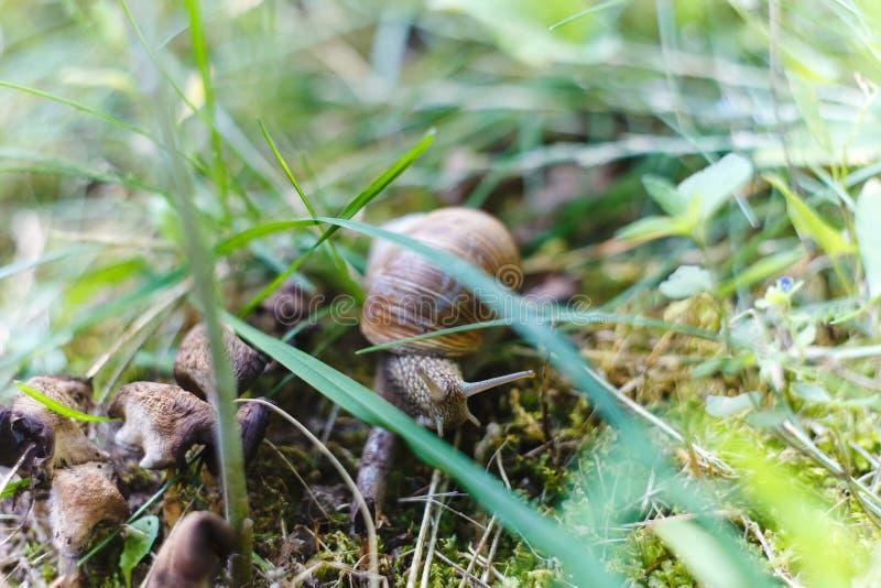 Schnecke, die auf den Wald kriecht lizenzfreies stockfoto