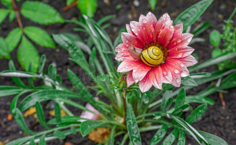 Schnecke, die in einer Blume aufwacht lizenzfreie stockfotos