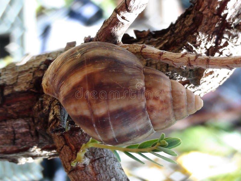 Schnecke im Baum stockfotos