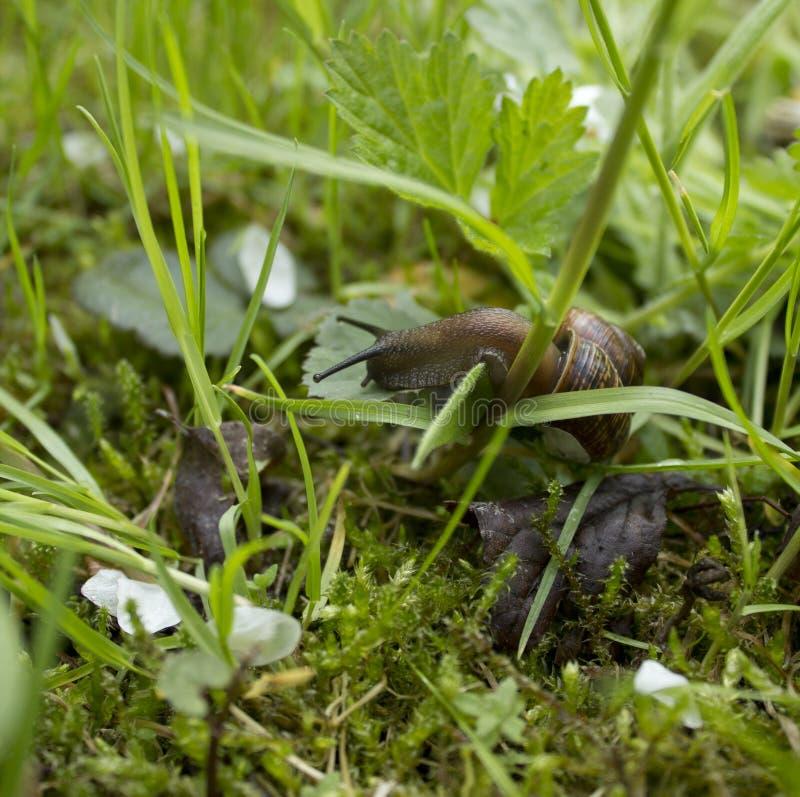 Schnecke im Garten lizenzfreie stockfotografie