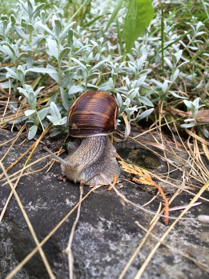 Schnecke im Garten. Weinberg, Schnecke, Kunst, Natur, Stone, Stein, Rock, beautiful, Dream stock images