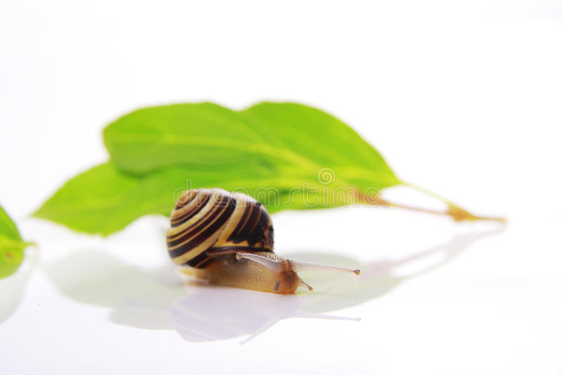 Schnecke und Blätter lizenzfreies stockbild