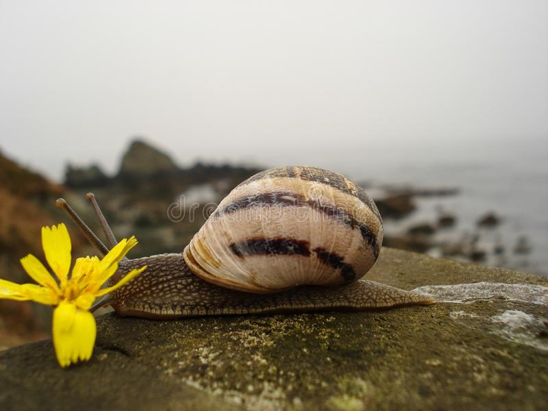 Schnecke von den braunen und schwarzen Bändern, die langsam auf hölzernes Geländer mit Unterseite der Ansicht nach dem Meer übers stockbild