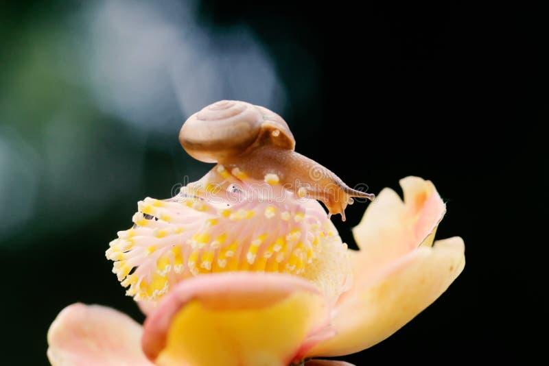 Schnecken, Schneckenweg über Blumen lizenzfreies stockfoto