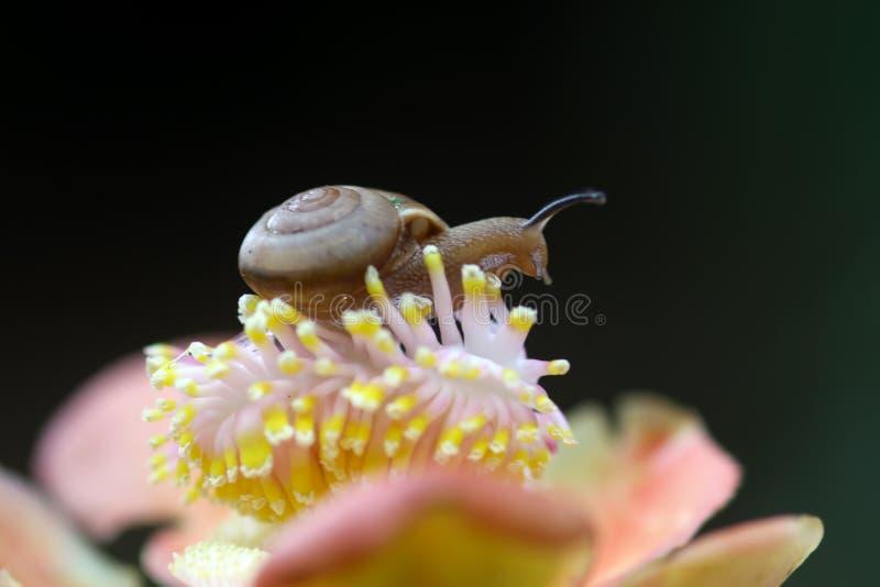 Schnecken, Schneckenweg über Blumen stockfoto