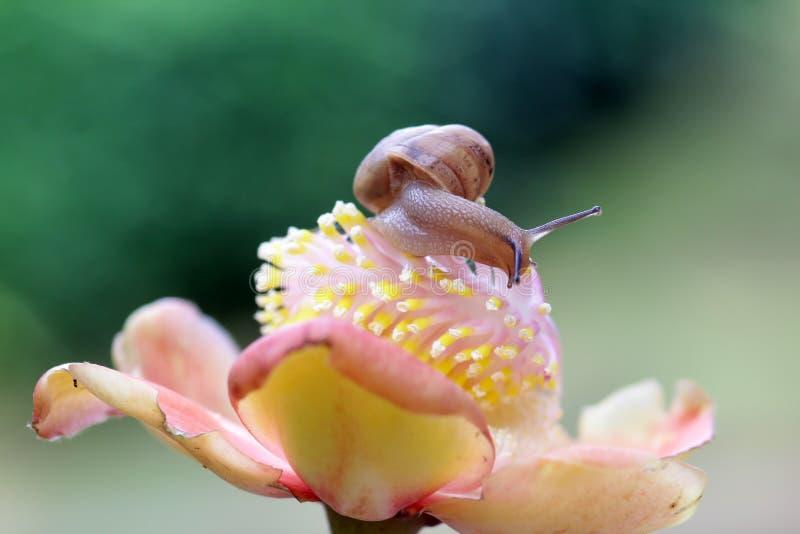 Schnecken, Schneckenweg über Blumen lizenzfreie stockfotos