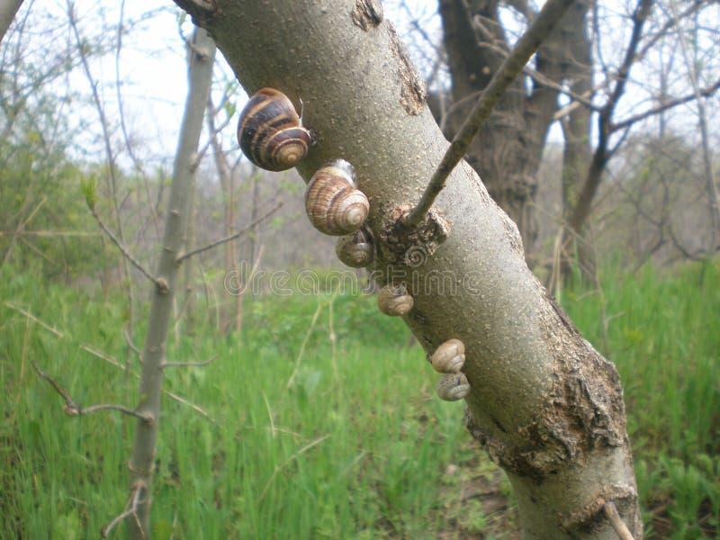 Schneckenfamilie auf einem Baum lizenzfreie stockfotos
