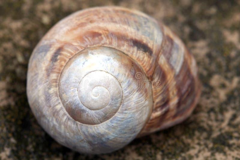 Download Schneckeshell stockbild. Bild von seashells, nave, schnecke - 9085769