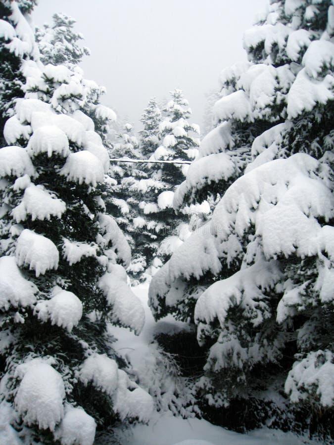 Schneeüberlastung zur Weihnachtszeit stockfotos