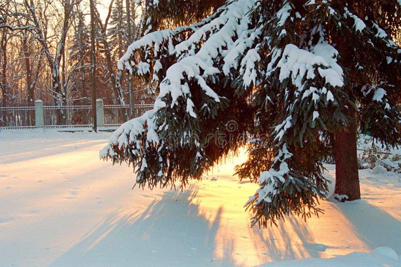 Schnee lizenzfreie stockfotografie