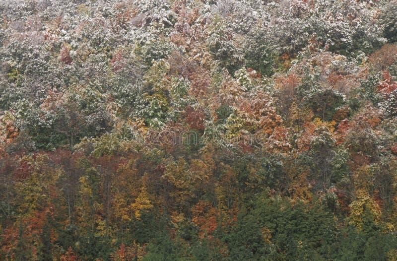 Schnee auf Autumn Trees, Allegheny-Berge stockbild