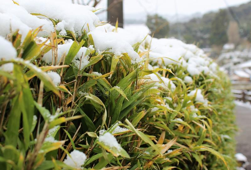 Schnee auf Bambuszaun stockbild