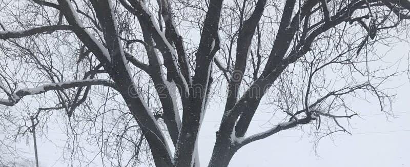 Schnee auf dem Baum lizenzfreies stockfoto