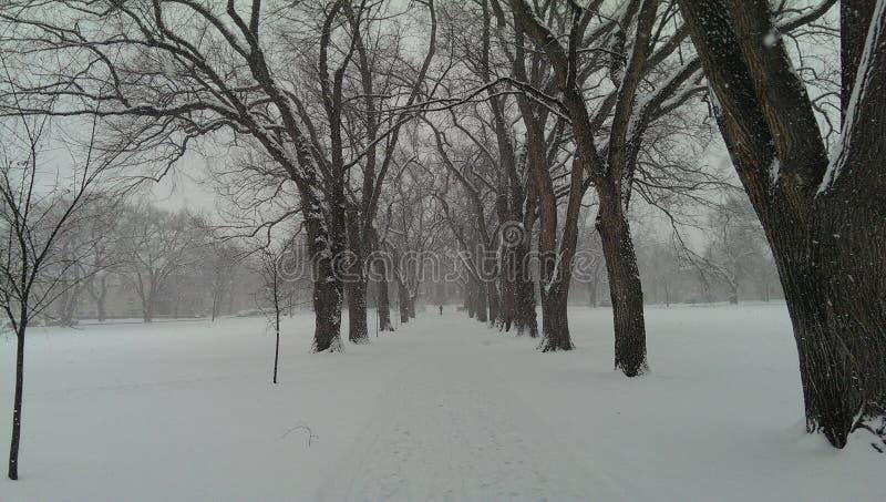 Schnee auf dem CSU-Oval lizenzfreie stockbilder