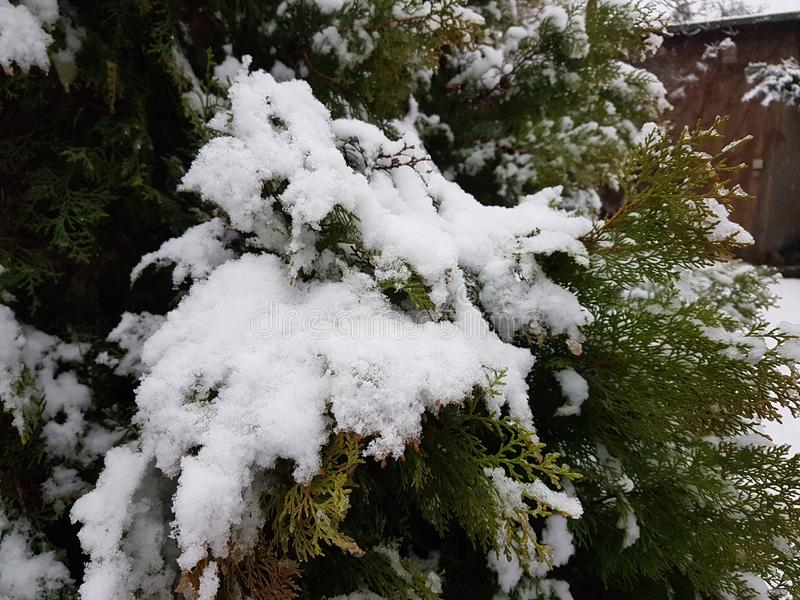 Schnee auf den Bäumen im Garten des Hauses in Storkow stockfotografie