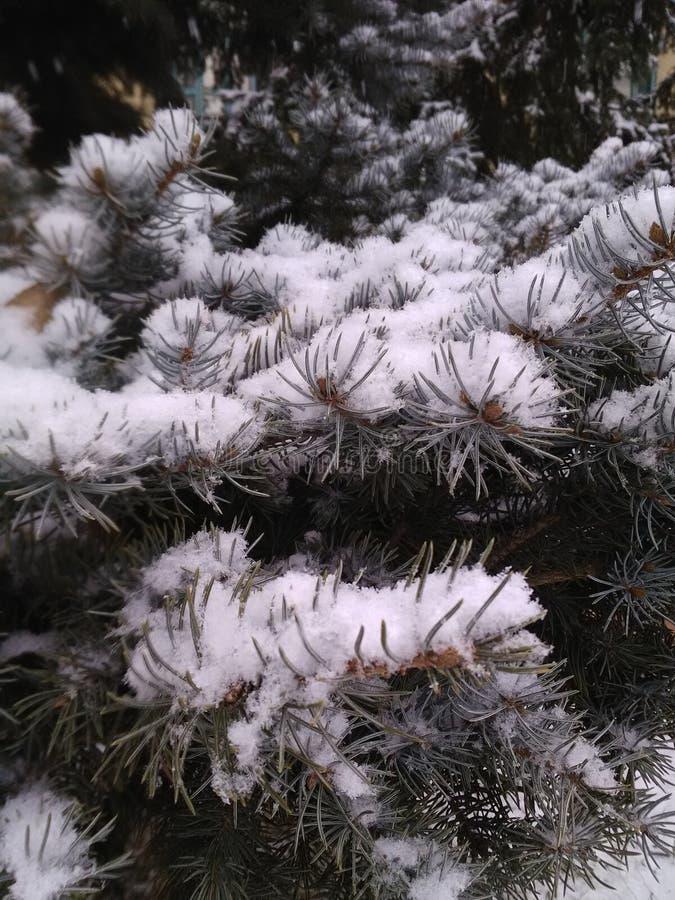 Schnee auf den Nadeln des Weihnachtsbaums stockfotos