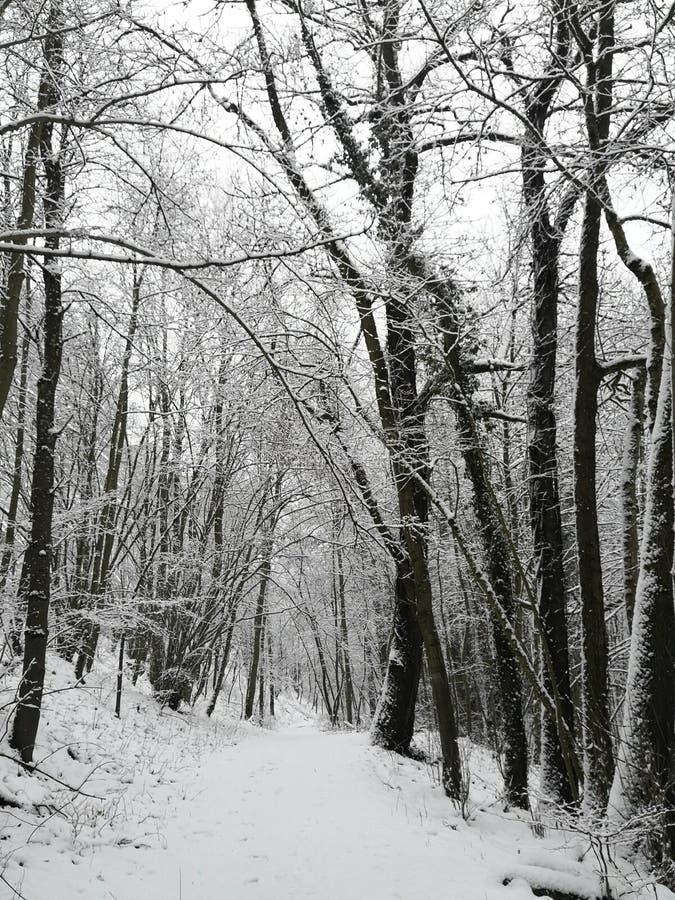 Schnee auf einem Waldweg in Luxemburg stockbilder