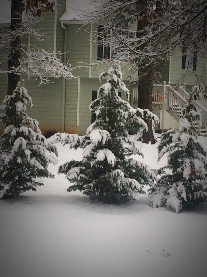 Schnee auf Evergreens lizenzfreie stockfotos