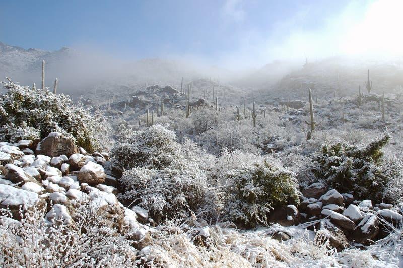 Schnee auf Kaktus stockfotos