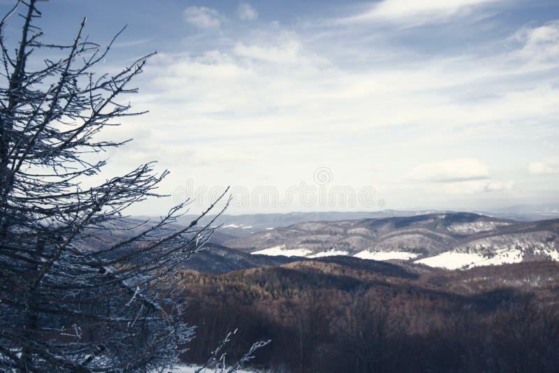 Schnee auf Tannenbaumzweigen stockfotos