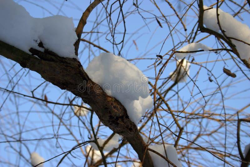 Schnee Auf Zweig 2 Stockfotografie