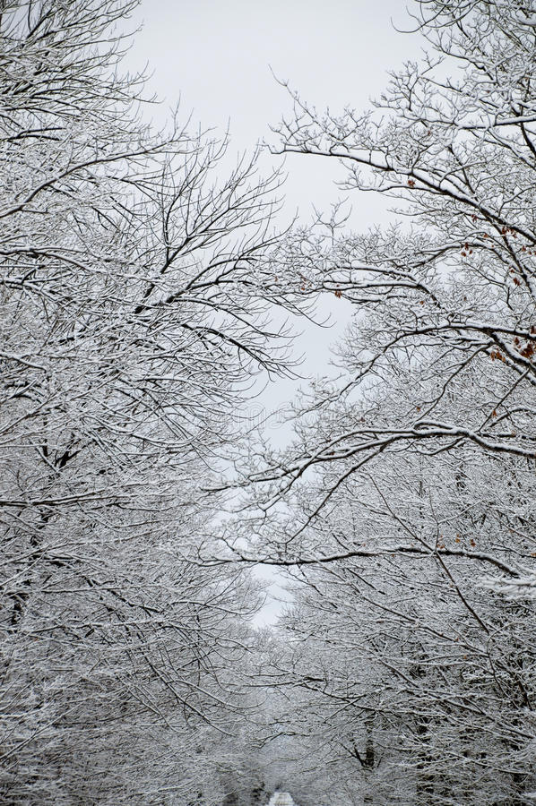 Schnee bedeckte Bäume in einer schneebedeckten Weglandschaft lizenzfreie stockfotografie