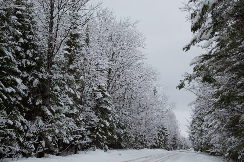 Schnee bedeckte Bäume in einer schneebedeckten Weglandschaft stockbild