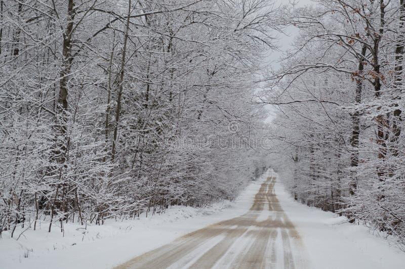 Schnee bedeckte Bäume in einer schneebedeckten Weglandschaft stockfotografie