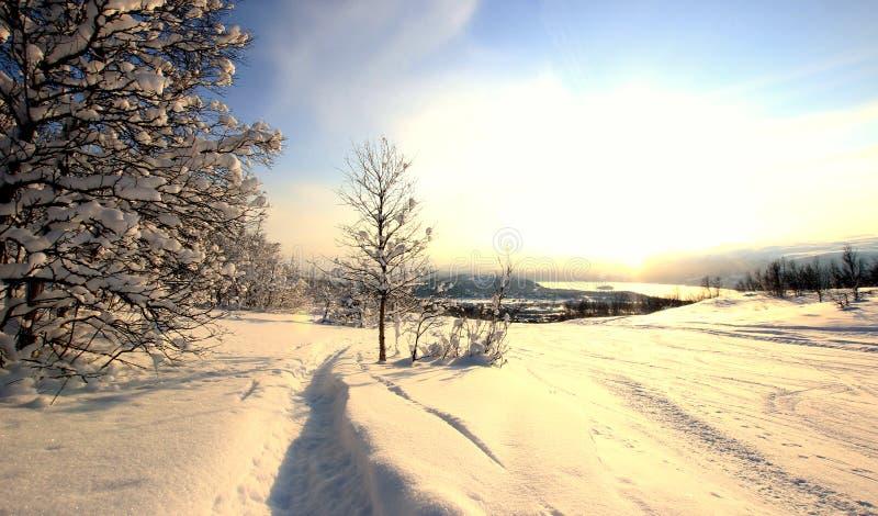 Schnee bedeckte Bäume Norwegen lizenzfreies stockfoto