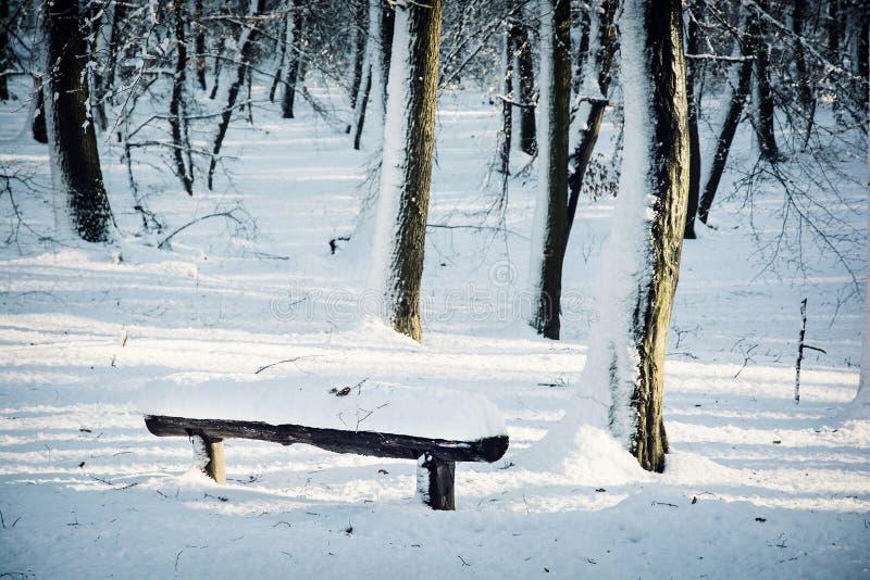 Schnee bedeckte Bank im Winterwald stockfoto