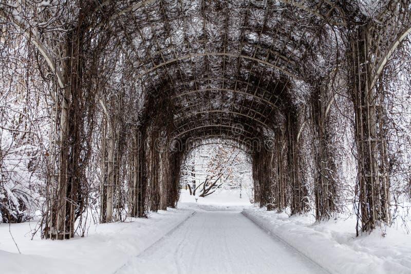 Schnee bedeckte Bogen mit Bergsteigeranlagen Schöne Wintersaisonlandschaft im Park stockfotos